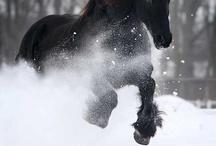 Horses & Equestrian Life / by Sue Baehr