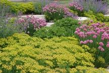 My Garden Designs / by Trez La Londe