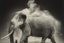 Elephants :) / by Lani Sherman