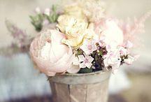 Flowers / by Farah Diab