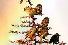 Pretty birds. / by Brenda DeLano