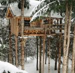 Treehouses / by Marsha Furr