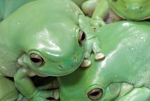 Frogs / by Eve Hogue