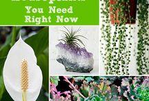 Plants / by Vanessa Serpas