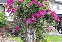 Yard/Gardening / by Susan Metler