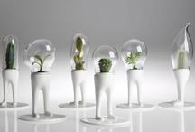 Plants / by Megann Zabel