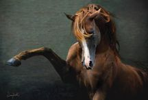 Equine. / by LoverOfBeauty