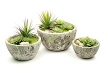 Green Apple Succulent Collection / For more information on any of our pre-mades, please call 404-351-0000 or send us an email at order@heeney.com. / by Heeney Company