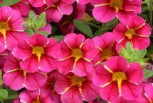 Bloomin' Beauties / by Fran Fox