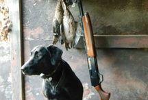 Duck hunting / by Jennifer McGraw