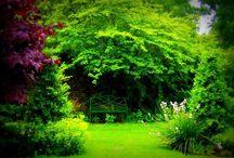 Secret Gardens / by Clara A