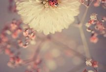 Pretty things / by Renee Balaoing