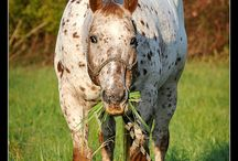 The Beauty of Equine / by Sherry Gallant