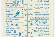 Sort Guide to EASTERN LAND BIRDS / by Matt Shapoff