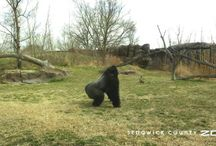 Zoo in Motion / Sedgwick County Zoo animal videos / by Sedgwick County Zoo