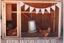 Backyard Chickens / by Becky Kelley