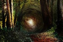 Into The Woods / Mystical Forest | Fairy Tale | Faeries | Grimm / by Grace Anne Vergara