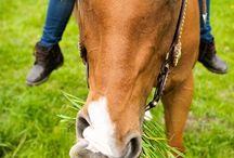 Hungry Horses / by Providence Hill Farm