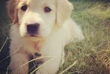 Choix Pups / by Choix