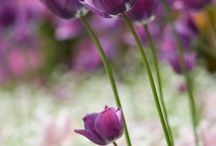 Flora & Fauna / by Jacquelyn Jones