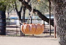 Autumn/Fall/Pumkins/Harvest/Thanksgiving / by Dorie Pyron