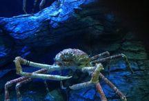 Crustaceans / by Menina isCrazy