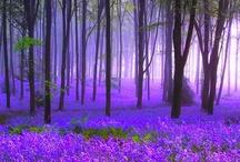 Purple!!!! / by Lizz Morgan