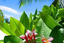 Tropical  Gardens / Tropical garden design. Tropical landscaping. Tropical garden plants. Balinese garden statues. Tropische garten. / by Anke Metzger