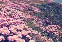 Label Pantone Radiant Orchid / by Label Ingénue
