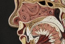 Anatomy / by Stacy Stone