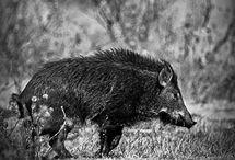 hunting / by Brandy Jackson