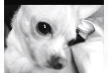 <3 dogs / by Cristina W
