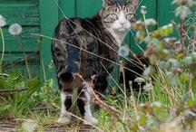 Cats / by Chris Gibson-Eventsindigital