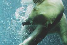 Favorite animals / by Claire Digiovanni