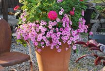 Gardens: Containers  / Pot 'em up! Containers are especially good for small space gardens.  / by Gardens of the Wild Wild West