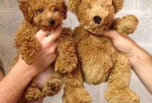 Cute Animals  / fuzzy creatures love  / by Claudia Rita