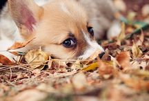 Cute Animals :D / by Megan Huro