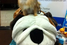 BlogPaws 2012 / Join the fun at the 4th annual #BlogPaws pet and social media conference Jun 21-23 in Salt Lake City. #BlogPawsQuotes / by Cinny W