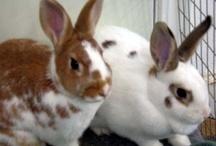 Adoptable Rabbits / by Rabbit Advocates