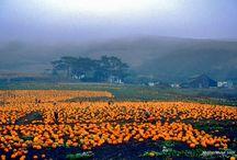 california / by jeanne mcallister
