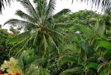 Tropical Landscaping / by Geneva Williamson