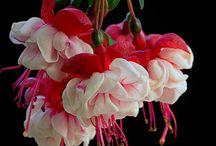 Flowers / by Linda Flint