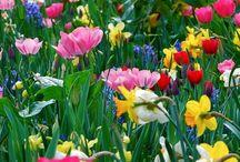 Spring Flowers / by Lisa Rose