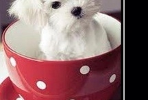 "My ""Elle"" the Maltese & Friends / by Carla Reed"