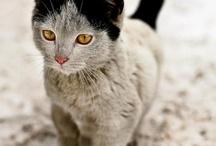 Meow mix. / by Donna Newsom