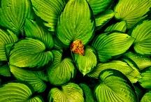 I Love Green / by Hanna Prytko