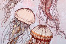 Illustration / by Elizabeth Kolberg