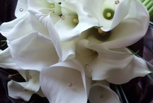 Bouquet / by Christine Rantz