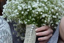 Everything gypsophilia / by Rosie Quinn