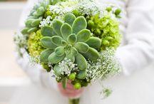 Succulents / by H.Bloom Weddings